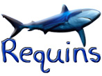 3 Galeries de photos de requins