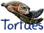 2 galeries de photos de tortues marines